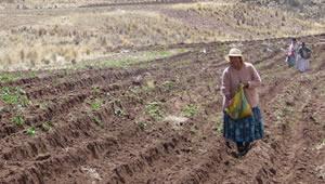mujer arado